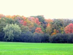 Autumn Hues by <b>S?m?d</b> ( a Panoramio image )