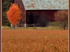 Barn and Orange Tree by <b>George Sled</b> ( a Panoramio image )