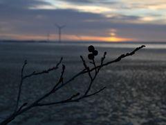 Alder and windmills by <b>Kimmo Lahti</b> ( a Panoramio image )