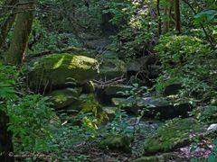 Parque Nacional Santa Rosa, Guanacaste, Costa Rica---En el sende by <b>Melsen Felipe</b> ( a Panoramio image )