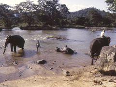 Pinnawala,   elephants bath by <b>Elios Amati (tashimelampo)</b> ( a Panoramio image )