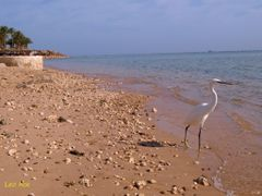 On the beach by <b>leohoe</b> ( a Panoramio image )
