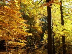 Goldener Herbst by <b>Schubs</b> ( a Panoramio image )
