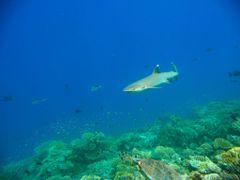 Shark. Porque los depredadores tambien pueden ser dociles. by <b>Madame X</b> ( a Panoramio image )