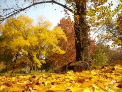 Golden autumn (for all Panoramio friends) by <b>B.Pejchinov</b> ( a Panoramio image )
