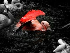 ?Bathing Time (Flamingo Version)~Link to my youtube~? by <b>?AXL?BACH?</b> ( a Panoramio image )