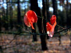 Jesien by <b>KseniaKasandra</b> ( a Panoramio image )