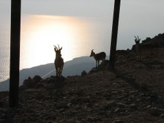 "Mezuqe Derago""t, Ibex against the Dead Sea, Israel by <b>Kobi Zilberstein</b> ( a Panoramio image )"