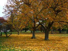 November by <b>Laszlo Janos</b> ( a Panoramio image )