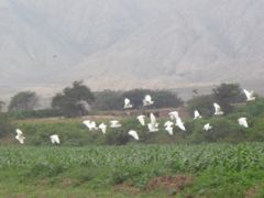 vida silvestre en casma by <b>ElvisCerdan...LIMA</b> ( a Panoramio image )
