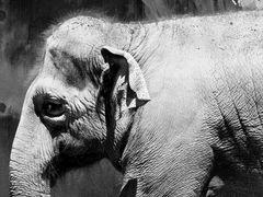 The Saggy Baggy Elephant by <b>Senex Prime</b> ( a Panoramio image )