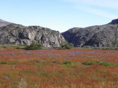 flower valley near narsarsuaq by <b>bergfex73</b> ( a Panoramio image )