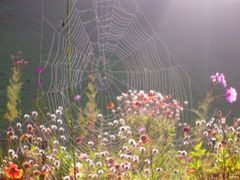 Spider Web in the Morning Dew by <b>Mary-Joye</b> ( a Panoramio image )