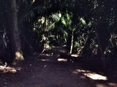 BELIZE: LAMANAI: jungle path to the Mask Temple by <b>Douglas W. Reynolds, Jr.</b> ( a Panoramio image )