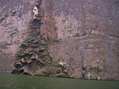 Arbol by <b>Carlos Cruz C</b> ( a Panoramio image )