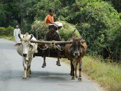 Bull Cart by <b>Manoo G</b> ( a Panoramio image )