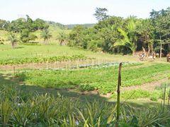 Mayan farm near Chaa Creek, Cayo District, western Belize by <b>C. Michael Hogan</b> ( a Panoramio image )