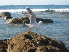 Seagull by <b>Cheryl Parkes</b> ( a Panoramio image )