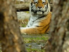 Is he staring at me? by <b>AmJB</b> ( a Panoramio image )