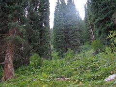 Тропа с перевала Телеты. 2645м. by <b>deev-ag</b> ( a Panoramio image )
