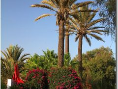 Colourful Agadir by <b>Maciejk</b> ( a Panoramio image )