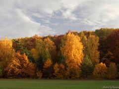 Autumn in the Czech Republic - Forest Karlstejn by <b>Roman Zazvorka</b> ( a Panoramio image )