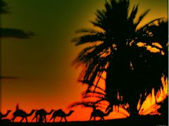 Camel Riding in the sunset in the Sahara by <b>olafju</b> ( a Panoramio image )