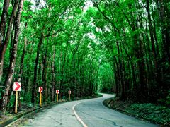 Bilar Man-Made Forest - Bilar, Bohol Philippines by <b>wgraphix nphotography</b> ( a Panoramio image )