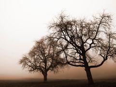 Baume am Wegrand bei Nebel by <b>z0df</b> ( a Panoramio image )