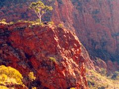 Lone Gum in the Red Centre, Ormiston Gorge, NT, Australia by <b>Ian Stehbens</b> ( a Panoramio image )