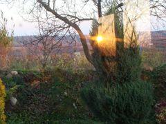 Krzew gorejacy  ==  Burning bush  == 11.11.2011 r. by <b>Dworzanski.Gryfino</b> ( a Panoramio image )