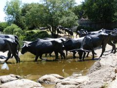 Longhorn Cattle Drive commemorated in bronze at the Convention C by <b>tillieannie</b> ( a Panoramio image )
