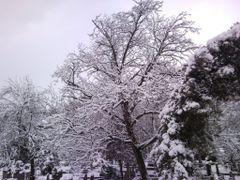 Najzad pravi sneg by <b>Milan Stojanovic-Stoja</b> ( a Panoramio image )