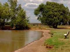 One of the fishing ponds at Ned Houk Park by <b>ArdenZ</b> ( a Panoramio image )