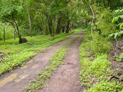 Camino de entrada al Refugio Nacional  de Vida Silvestre Iguanit by <b>Melsen Felipe</b> ( a Panoramio image )