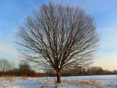Одинокое пышное дерево by <b>walper</b> ( a Panoramio image )