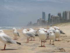 Gold coast by <b>Oleg Dubinets</b> ( a Panoramio image )