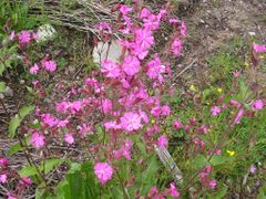 mountain flowers (by matkustava_kissa) by <b>Photochain</b> ( a Panoramio image )