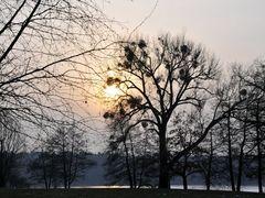 fairy tree.... by <b>BernardJ47</b> ( a Panoramio image )