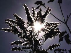Sometimes shining weeds by <b>roro-ji2981</b> ( a Panoramio image )