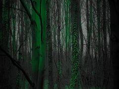 Green Nostalgia by <b>MoUzEs</b> ( a Panoramio image )