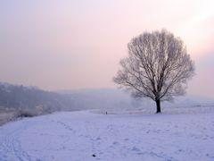 Dresden Elbe Valley in Winter by <b>M.Kreuz</b> ( a Panoramio image )