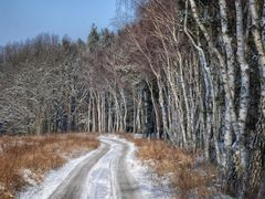 road near the forest by <b>BernardJ47</b> ( a Panoramio image )