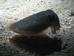 Weird fish by <b>eva lewitus</b> ( a Panoramio image )