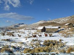Llamas en la nieve by <b>Jaime Caviedes</b> ( a Panoramio image )