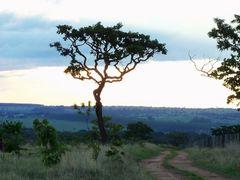 Vida no Cerrado!!! by <b>Arolldo Costa Oliveira</b> ( a Panoramio image )