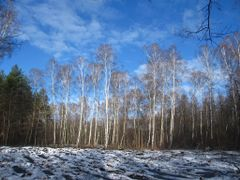 "Park Lesny ""Bemowo"" by <b>?BOGDAN?</b> ( a Panoramio image )"