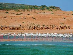 Flamingos by <b>Martin (WPF)</b> ( a Panoramio image )