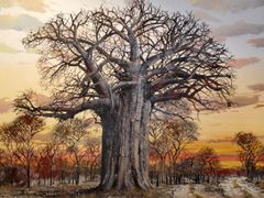 A tree of the past that was lost in a fire. by <b>Bobsky.</b> ( a Panoramio image )