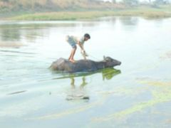 Yes, its Happen only in India by <b>Jawed Hasan</b> ( a Panoramio image )
